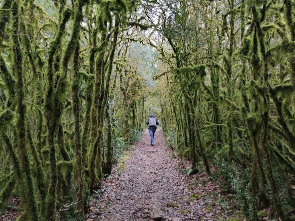 wandeling Bruniquel kronkelbomen